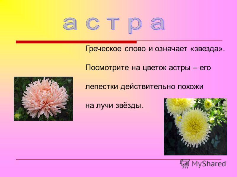 Греческое слово и означает «звезда». Посмотрите на цветок астры – его лепестки действительно похожи на лучи звёзды.