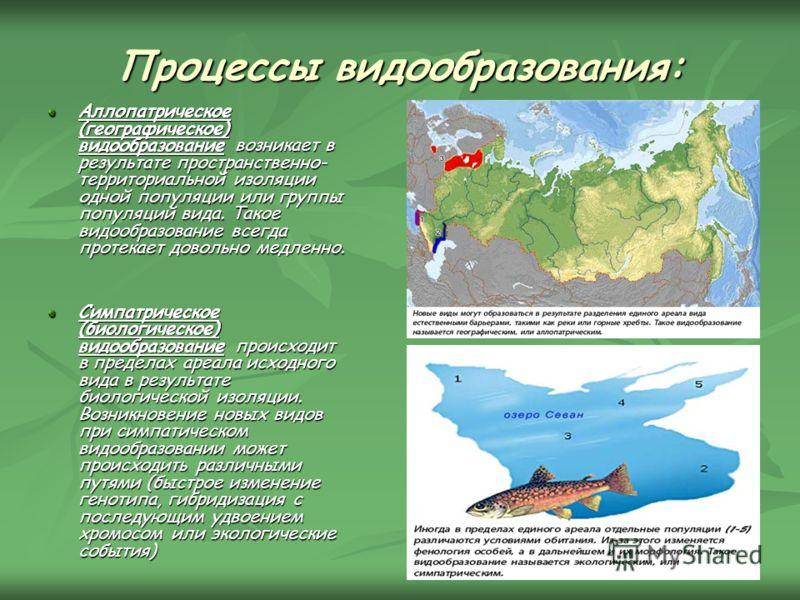 Процессы видообразования: Аллопатрическое (географическое) видообразование возникает в результате пространственно- территориальной изоляции одной популяции или группы популяций вида. Такое видообразование всегда протекает довольно медленно. Симпатрич