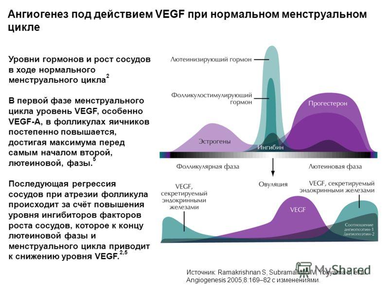 Ангиогенез под действием VEGF при нормальном менструальном цикле Источник: Ramakrishnan S, Subramanian IV, Yokyama Y, et al. Angiogenesis 2005;8:169–82 с изменениями. Уровни гормонов и рост сосудов в ходе нормального менструального цикла 2 В первой ф
