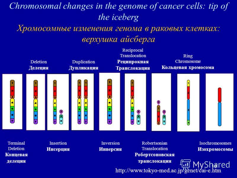19 Chromosomal changes in the genome of cancer cells: tip of the iceberg Хромосомные изменения генома в раковых клетках: верхушка айсберга http://www.tokyo-med.ac.jp/genet/cai-e.htm Terminal Deletion Концевая делеция Ring Chromosome Кольцевая хромосо