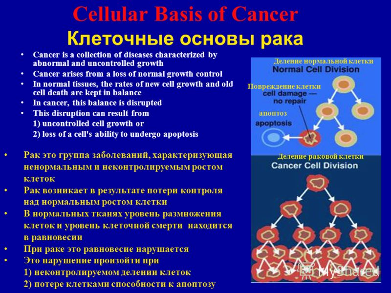 2 Cellular Basis of Cancer Клеточные основы рака Cancer is a collection of diseases characterized by abnormal and uncontrolled growth Cancer arises from a loss of normal growth control In normal tissues, the rates of new cell growth and old cell deat