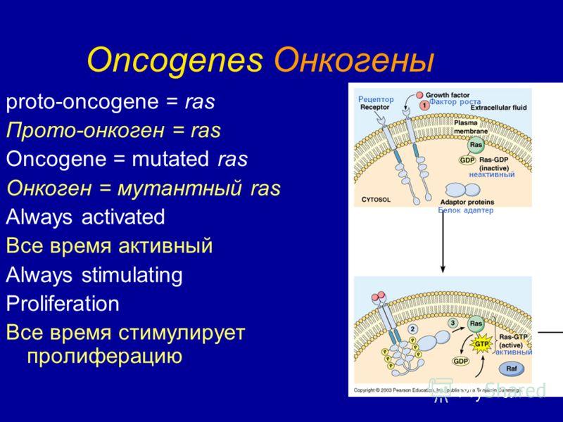 37 Oncogenes Онкогены proto-oncogene = ras Прото-онкоген = ras Oncogene = mutated ras Онкоген = мутантный ras Always activated Все время активный Always stimulating Proliferation Все время стимулирует пролиферацию Рецептор Фактор роста Белок адаптер