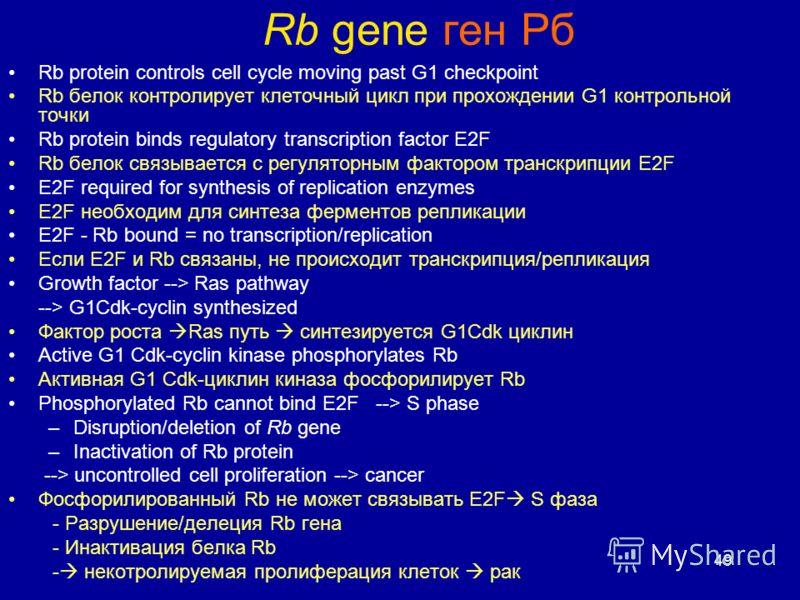 49 Rb gene ген Рб Rb protein controls cell cycle moving past G1 checkpoint Rb белок контролирует клеточный цикл при прохождении G1 контрольной точки Rb protein binds regulatory transcription factor E2F Rb белок связывается с регуляторным фактором тра