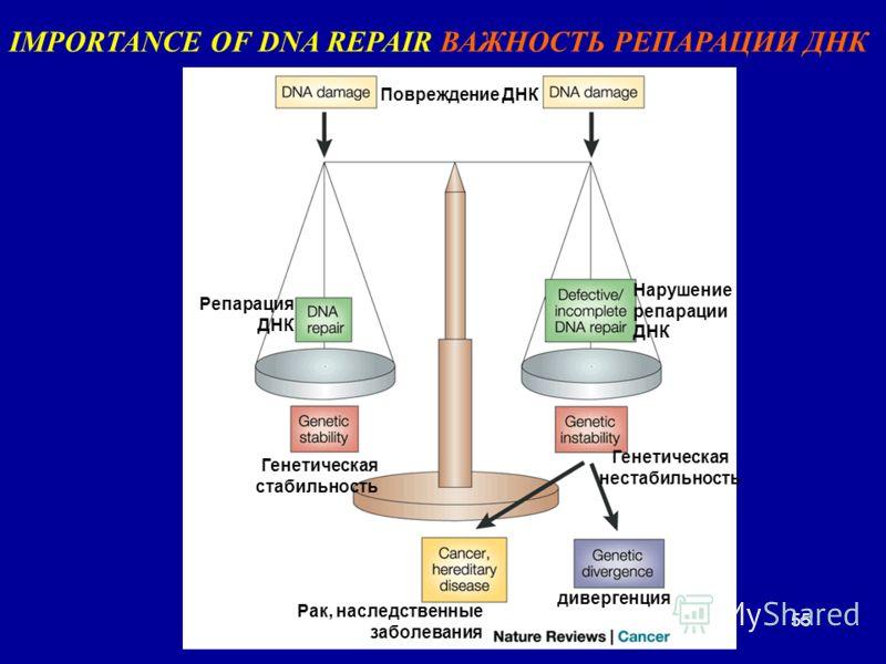 55 IMPORTANCE OF DNA REPAIR ВАЖНОСТЬ РЕПАРАЦИИ ДНК Повреждение ДНК Репарация ДНК Нарушение репарации ДНК Генетическая стабильность Генетическая нестабильность дивергенция Рак, наследственные заболевания