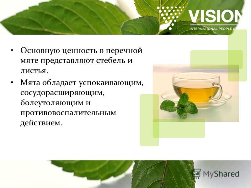 Основную ценность в перечной мяте представляют стебель и листья. Мята обладает успокаивающим, сосудорасширяющим, болеутоляющим и противовоспалительным действием.