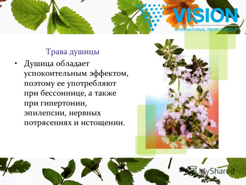 Трава душицы Душица обладает успокоительным эффектом, поэтому ее употребляют при бессоннице, а также при гипертонии, эпилепсии, нервных потрясениях и истощении.