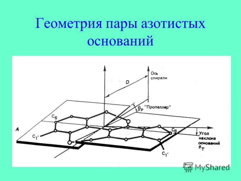 Геометрия пары азотистых оснований