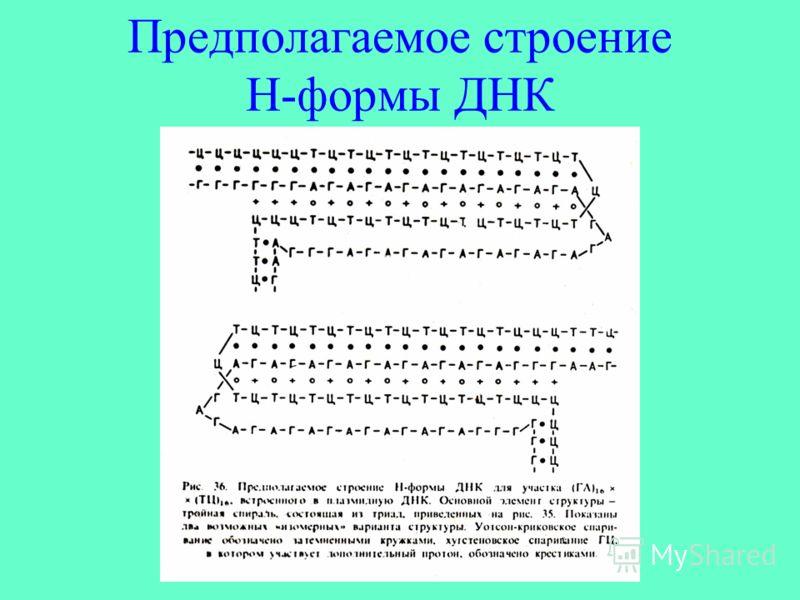 Предполагаемое строение Н-формы ДНК