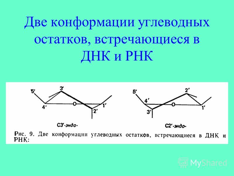 Две конформации углеводных остатков, встречающиеся в ДНК и РНК