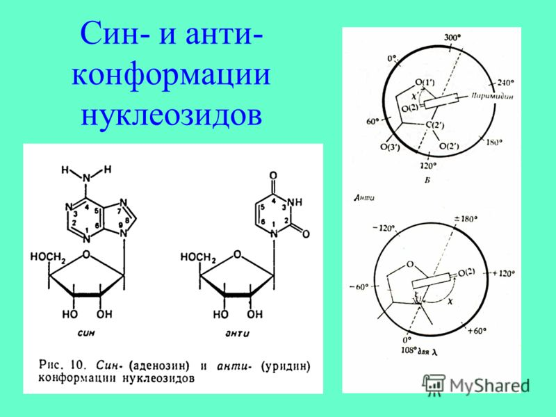 Син- и анти- конформации нуклеозидов