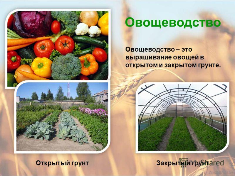 Полеводство Картофель – один из главных продуктов человека. Из него также делают картофельный крахмал.