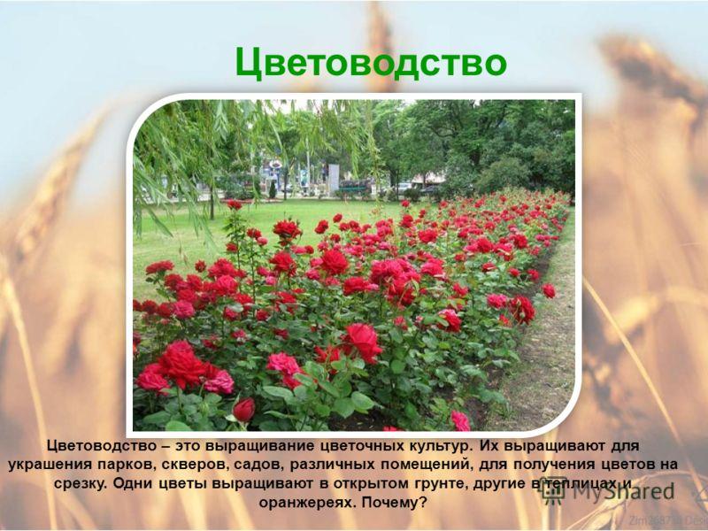 Плодоводство Одна из самых распространенных ягодных культур – клубника. Её выращивают на полях и на приусадебных участках.