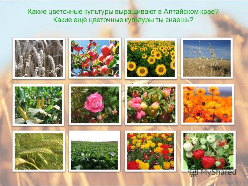 Какие плодово-ягодные культуры выращивают в Алтайском крае? Какие ещё ягоды и фрукты ты знаешь?