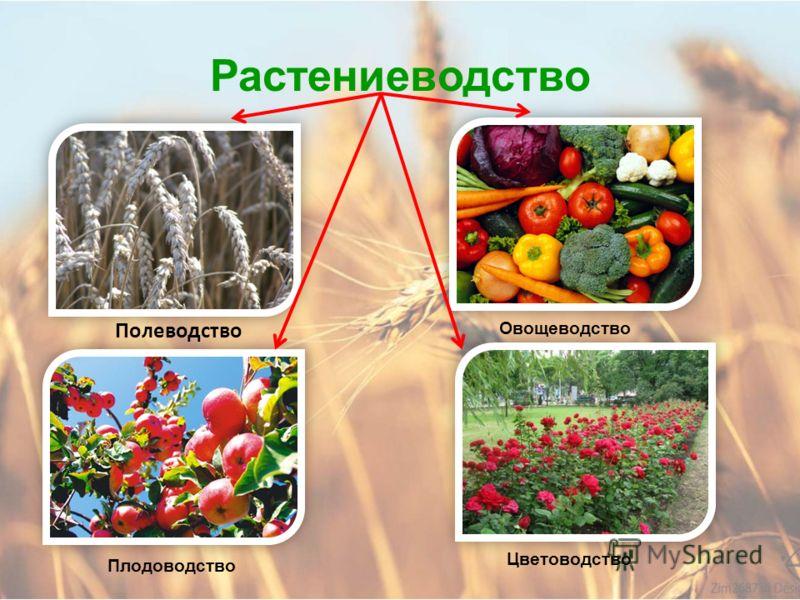 Найдём ответы на вопросы: Чем отличаются культурные и дикорастущие растения? Что такое растениеводство? На какие отрасли делится растениеводство? Как развито растениеводство в Алтайском крае? Найди ответы на вопросы в учебнике на странице 202