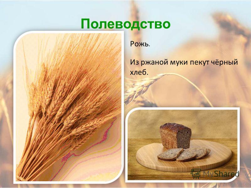 Полеводство Основная злаковая культура Алтайского края – пшеница твердых сортов. Из пшеничной муки пекут хлеб, делают макароны, манную крупу.