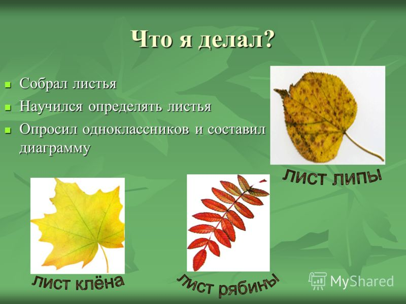 Буду делать: Пойду в лес или в парк и соберу листья разных деревьев. Открываю атлас-определитель, нахожу лист данной формы и определяю название дерева. Сделаю вывод.