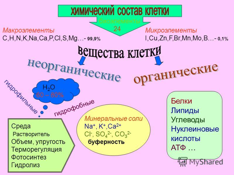 биоэлементы 24 Макроэлементы C,H,N,K,Na,Ca,P,Cl,S,Mg…- 99,9% Микроэлементы I,Cu,Zn,F,Br,Mn,Mo,B…- 0,1% Н 2 О 60 – 80% гидрофильные гидрофобные Среда Растворитель Объем, упругость Терморегуляция Фотосинтез Гидролиз Белки Липиды Углеводы Нуклеиновые ки