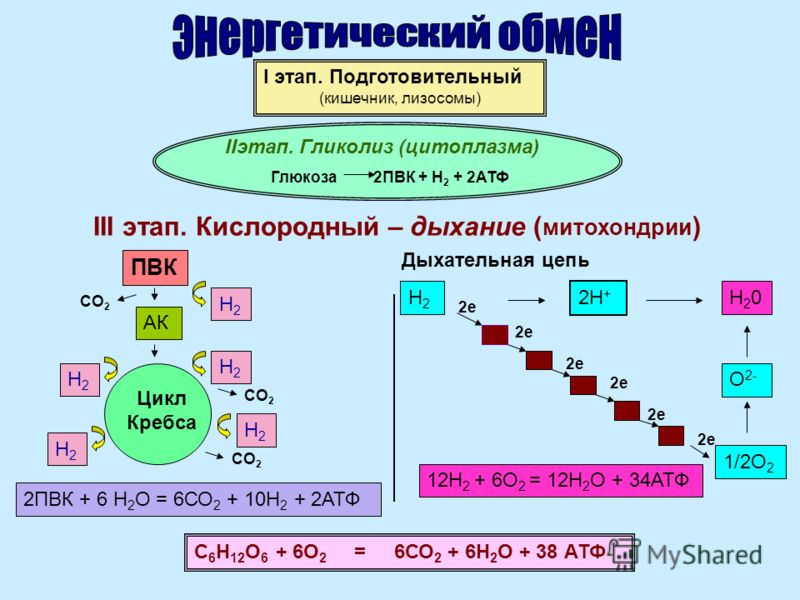 I этап. Подготовительный (кишечник, лизосомы) IIэтап. Гликолиз (цитоплазма) Глюкоза 2ПВК + Н 2 + 2АТФ III этап. Кислородный – дыхание ( митохондрии ) ПВК АК Цикл Кребса Дыхательная цепь С 6 Н 12 О 6 + 6О 2 = 6СО 2 + 6Н 2 О + 38 АТФ Н2Н2 Н2Н2 Н2Н2 Н2Н