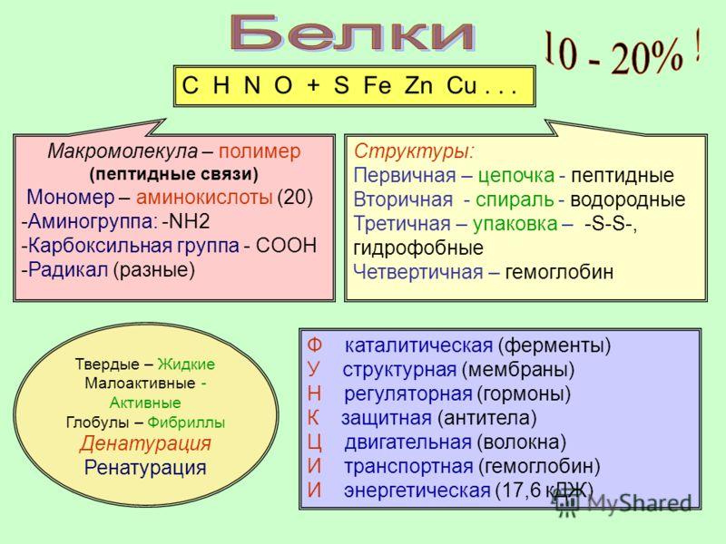 C H N O + S Fe Zn Cu... Структуры: Первичная – цепочка - пептидные Вторичная - спираль - водородные Третичная – упаковка – -S-S-, гидрофобные Четвертичная – гемоглобин Макромолекула – полимер (пептидные связи) Мономер – аминокислоты (20) -Аминогруппа