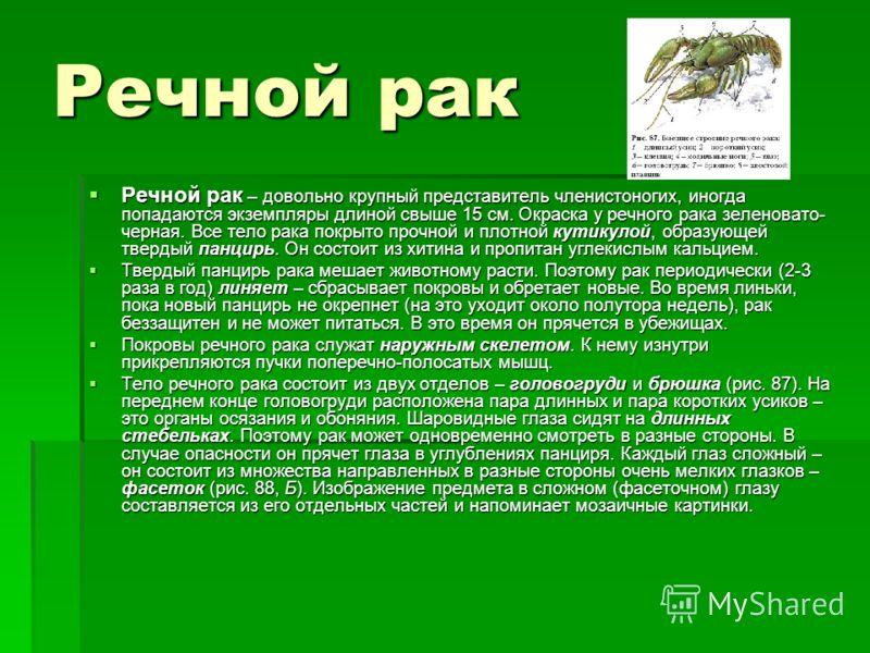 Речной рак Речной рак – довольно крупный представитель членистоногих, иногда попадаются экземпляры длиной свыше 15 см. Окраска у речного рака зеленовато- черная. Все тело рака покрыто прочной и плотной кутикулой, образующей твердый панцирь. Он состои