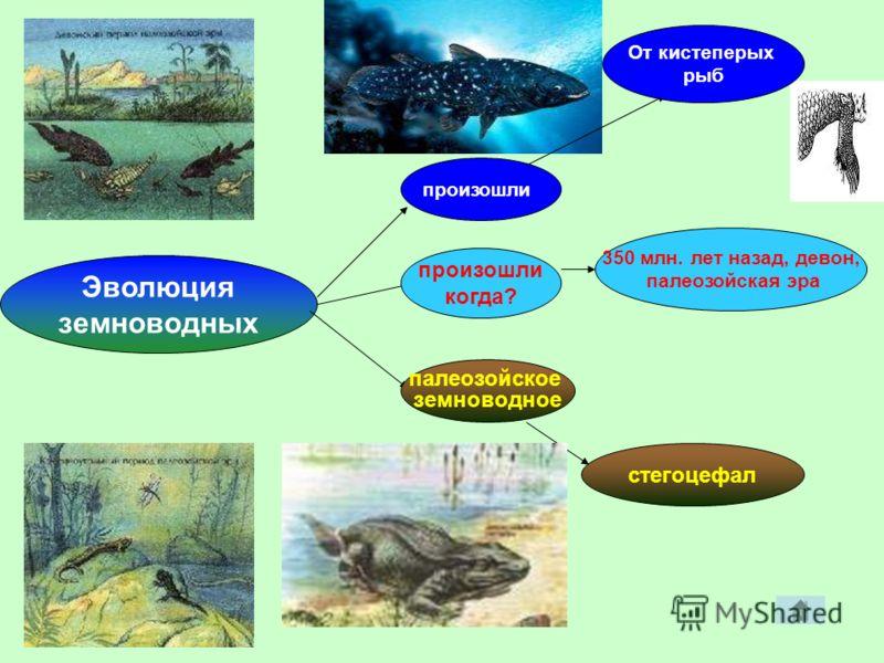 350 млн. лет назад, девон, палеозойская эра Эволюция земноводных стегоцефал произошли произошли когда? палеозойское земноводное От кистеперых рыб