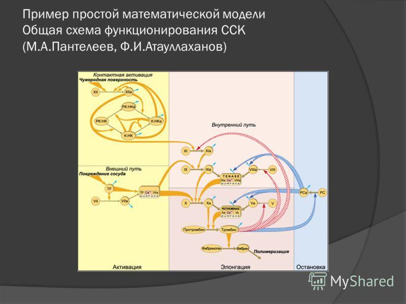 Пример простой математической модели Общая схема функционирования ССК (М.А.Пантелеев, Ф.И.Атауллаханов)
