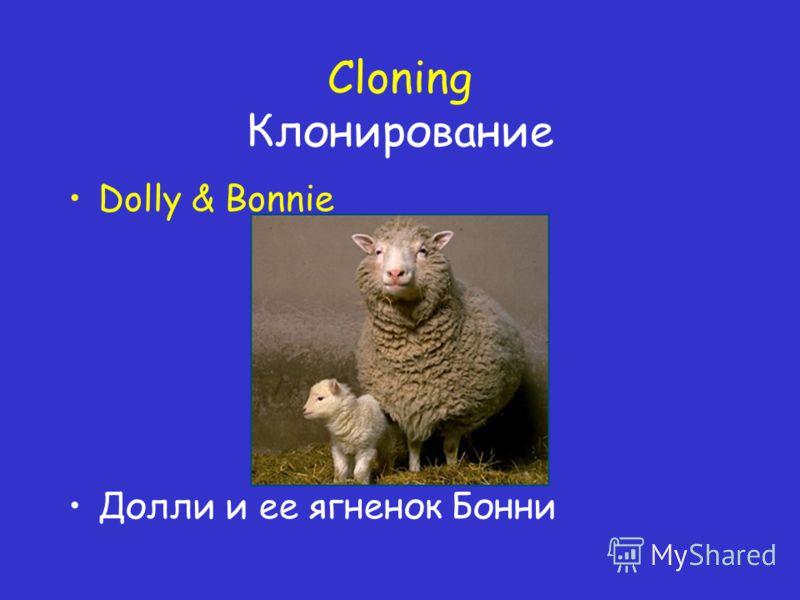 Cloning Клонирование Dolly & Bonnie Долли и ее ягненок Бонни