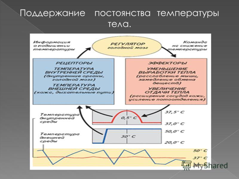 Поддержание постоянства температуры тела.