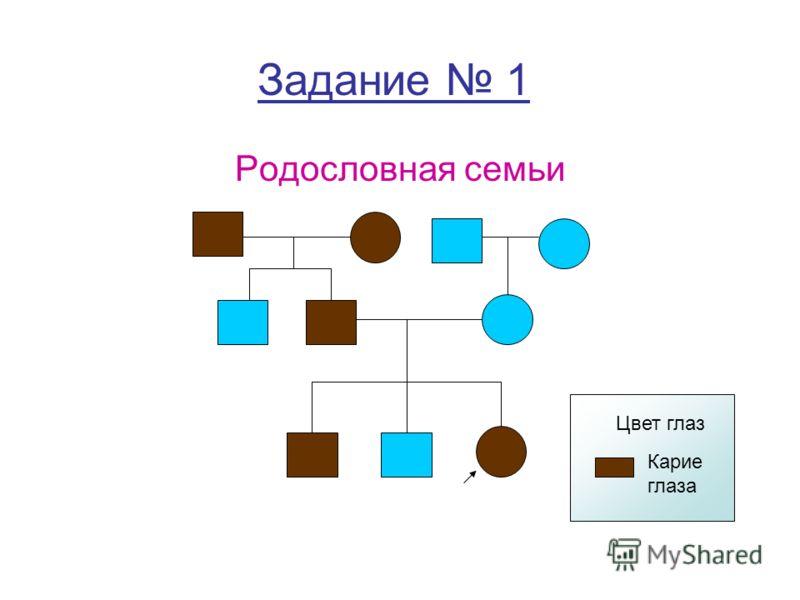 Задание 1 Родословная семьи Карие глаза Цвет глаз
