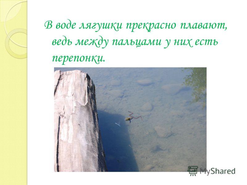 В воде лягушки прекрасно плавают, ведь между пальцами у них есть перепонки.