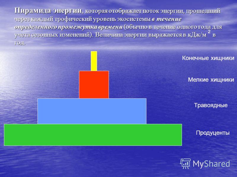 Пирамида энергии, которая отображает поток энергии, прошедший через каждый трофический уровень экосистемы в течение определенного промежутка времени (