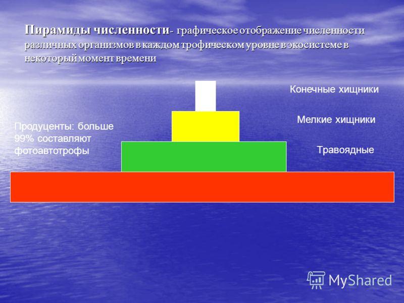 Пирамиды численности - графическое отображение численности различных организмов в каждом трофическом уровне в экосистеме в некоторый момент времени Конечные хищники Мелкие хищники Травоядные Продуценты: больше 99% составляют фотоавтотрофы