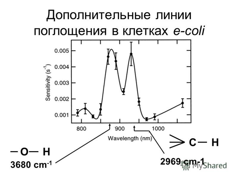 Дополнительные линии поглощения в клетках e-coli CH OH 3680 cm -1 2969 cm-1