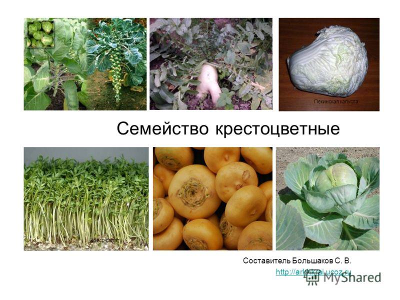 Семейство крестоцветные Составитель Большаков С. В. http://arkhkrai.ucoz.ru Редька Кресс-салат Пекинская капуста
