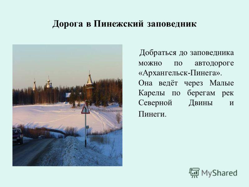 Дорога в Пинежский заповедник Добраться до заповедника можно по автодороге «Архангельск-Пинега». Она ведёт через Малые Карелы по берегам рек Северной Двины и Пинеги.