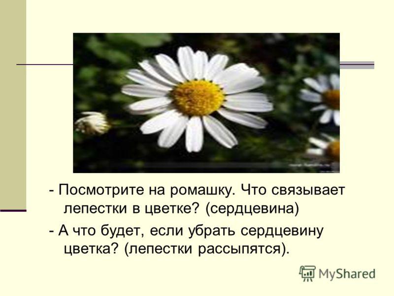 - Посмотрите на ромашку. Что связывает лепестки в цветке? (сердцевина) - А что будет, если убрать сердцевину цветка? (лепестки рассыпятся).