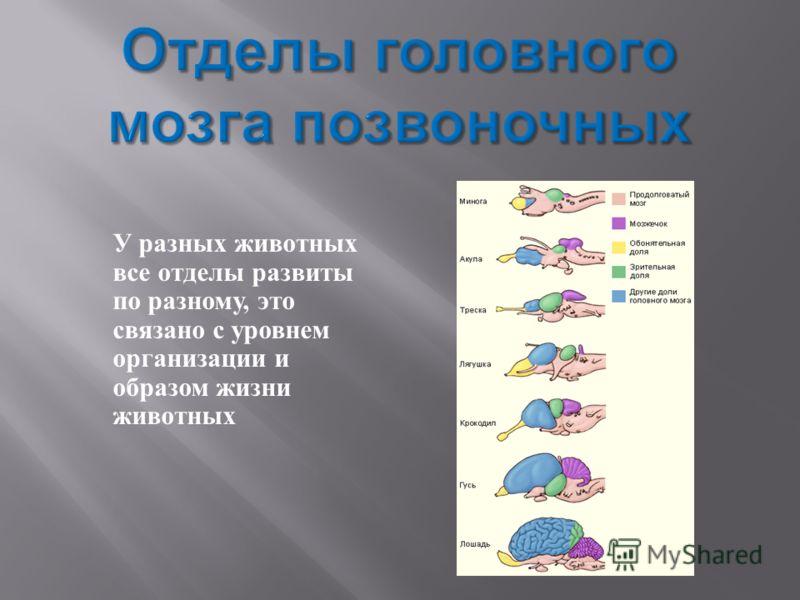 У разных животных все отделы развиты по разному, это связано с уровнем организации и образом жизни животных