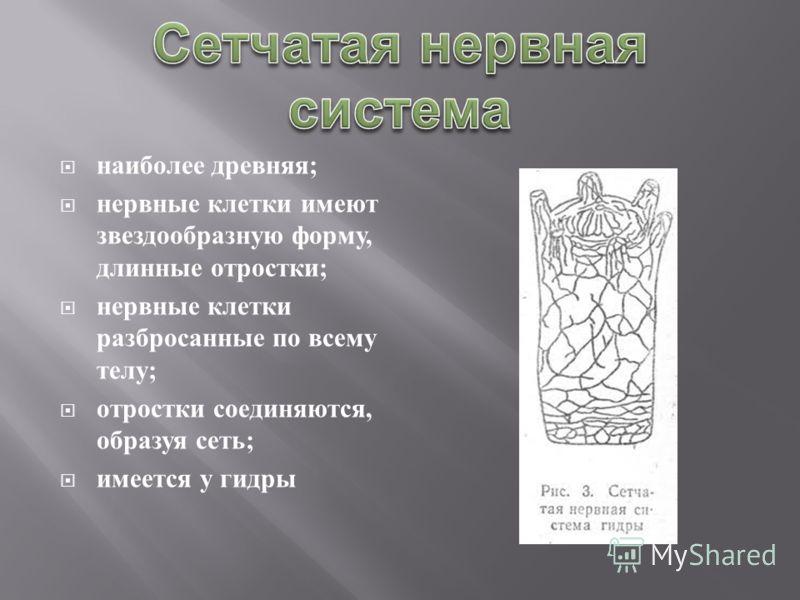 наиболее древняя ; нервные клетки имеют звездообразную форму, длинные отростки ; нервные клетки разбросанные по всему телу ; отростки соединяются, образуя сеть ; имеется у гидры