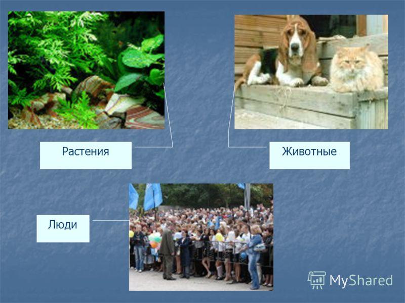 Растения Животные Люди