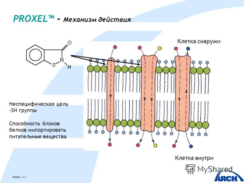 PROXEL v1.1 PROXEL - Механизм действия Клетка снаружи Клетка внутри Неспецифическая цель -SH группы Способность блоков белков импортировать питательные вещества