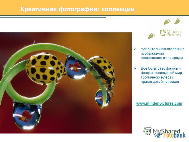 Удивительная коллекция изображений прекрасного от природы Все богатство фауны и флоры, подводный мир, тропические леса и нравы дикой природы www.mindenpictures.com Креативная фотография: коллекции