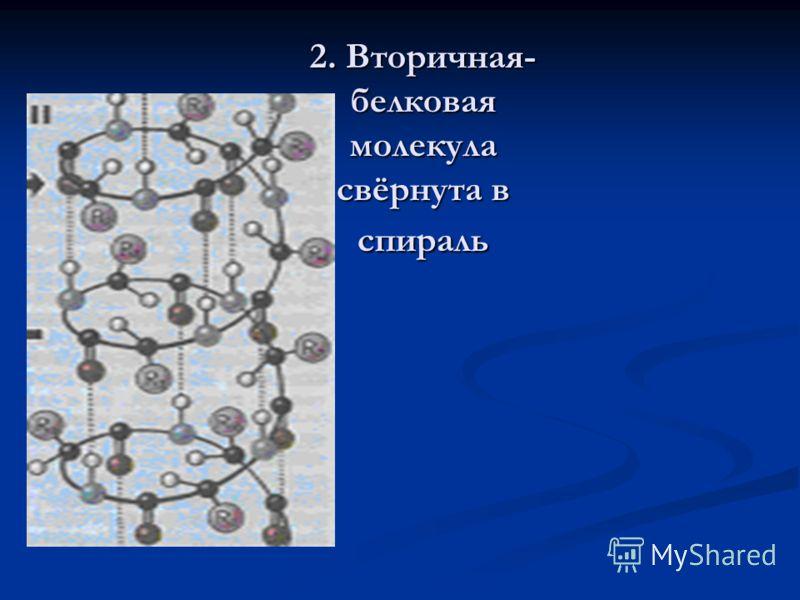 2. Вторичная- белковая молекула свёрнута в спираль