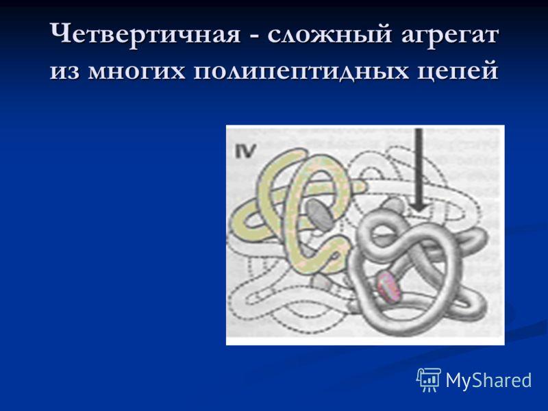 Четвертичная - сложный агрегат из многих полипептидных цепей