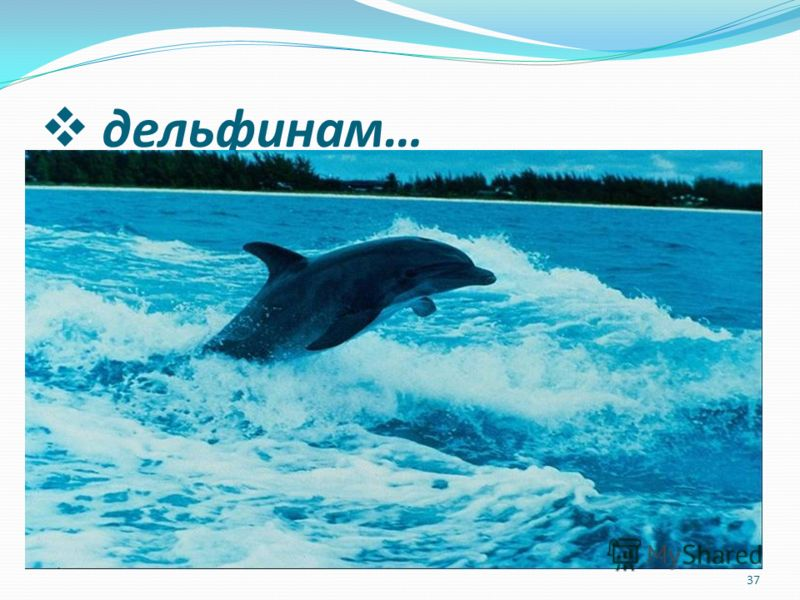 дельфинам … 37
