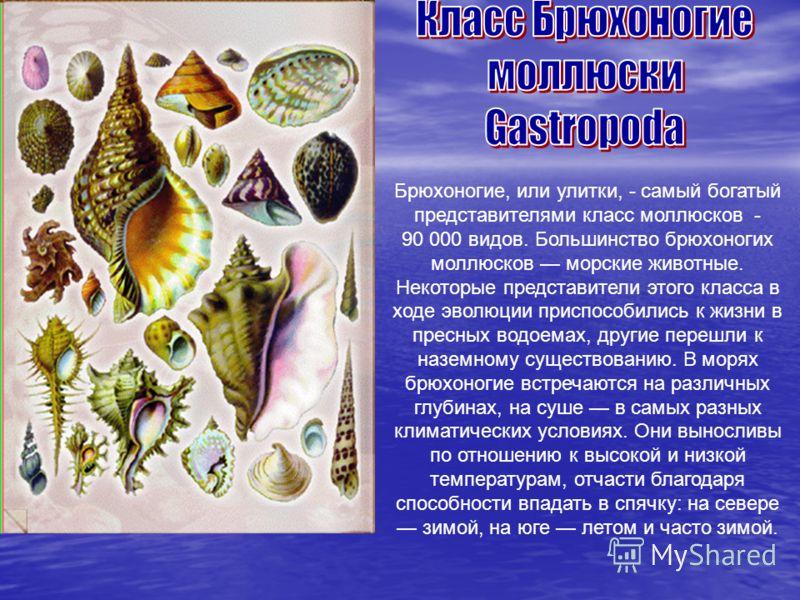 Брюхоногие, или улитки, - самый богатый представителями класс моллюсков - 90 000 видов. Большинство брюхоногих моллюсков морские животные. Некоторые представители этого класса в ходе эволюции приспособились к жизни в пресных водоемах, другие перешли