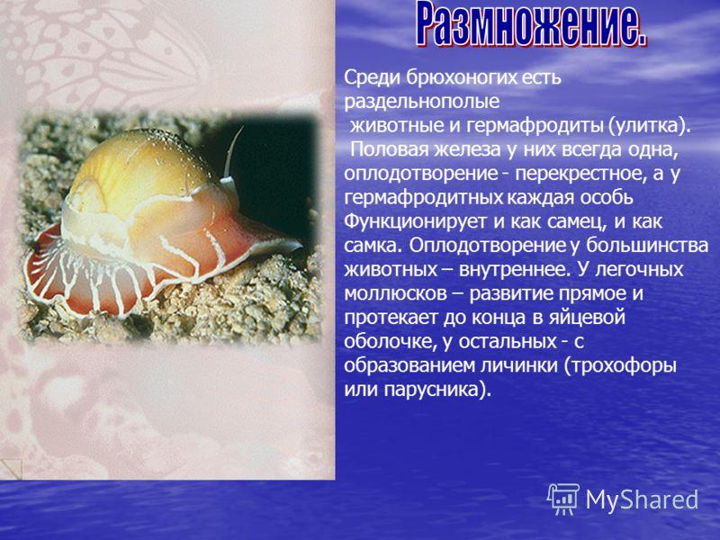 Среди брюхоногих есть раздельнополые животные и гермафродиты (улитка). Половая железа у них всегда одна, оплодотворение - перекрестное, а у гермафродитных каждая особь Функционирует и как самец, и как самка. Оплодотворение у большинства животных – вн
