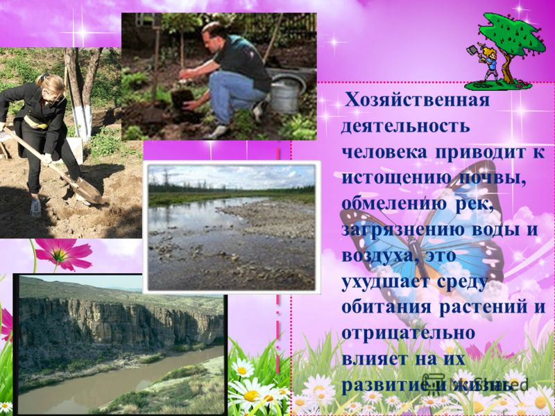 Хозяйственная деятельность человека приводит к истощению почвы, обмелению рек, загрязнению воды и воздуха, это ухудшает среду обитания растений и отрицательно влияет на их развитие и жизнь