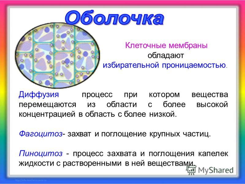 Диффузия процесс при котором вещества перемещаются из области с более высокой концентрацией в область с более низкой. Фагоцитоз- захват и поглощение крупных частиц. Пиноцитоз - процесс захвата и поглощения капелек жидкости с растворенными в ней вещес