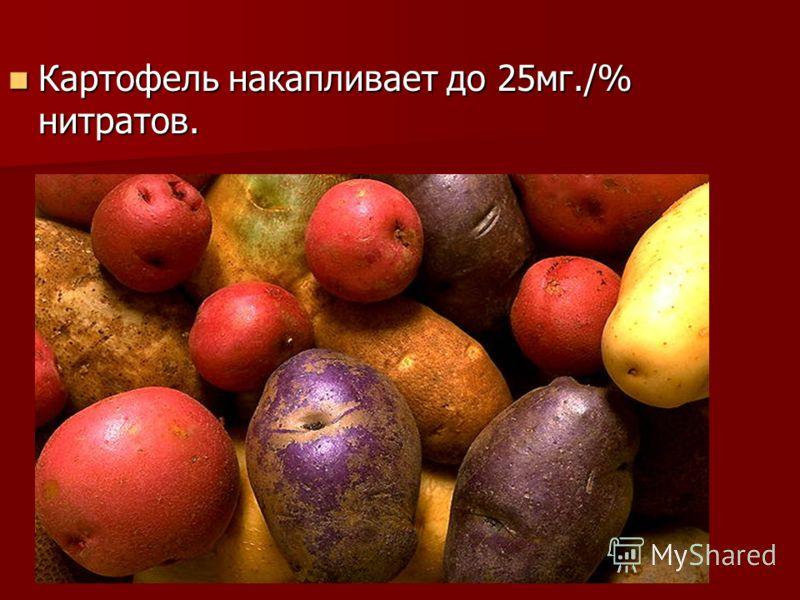 Картофель накапливает до 25мг./% нитратов. Картофель накапливает до 25мг./% нитратов.