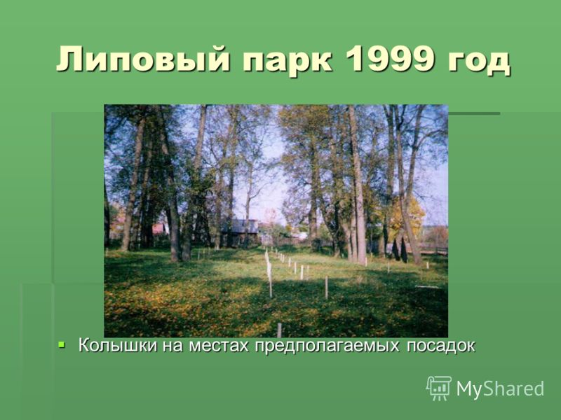 Липовый парк 1999 год Липовый парк 1999 год Колышки на местах предполагаемых посадок Колышки на местах предполагаемых посадок
